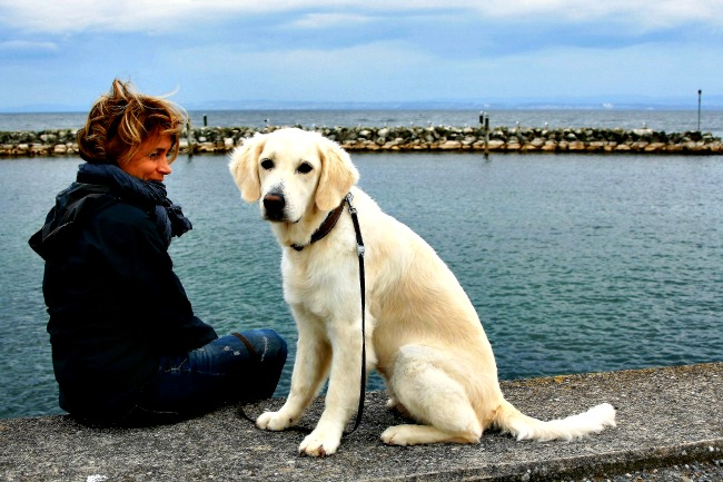 Adolescent puppy and owner on the dock