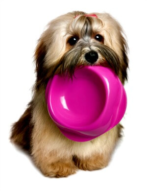 Puppy holding pink bowl
