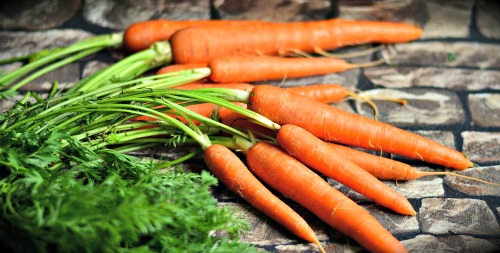 Carrots for homemade puppy food
