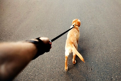 puppy pulling on leash