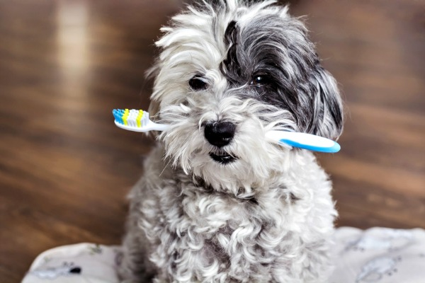 Puppy with toothbrush for teeth care
