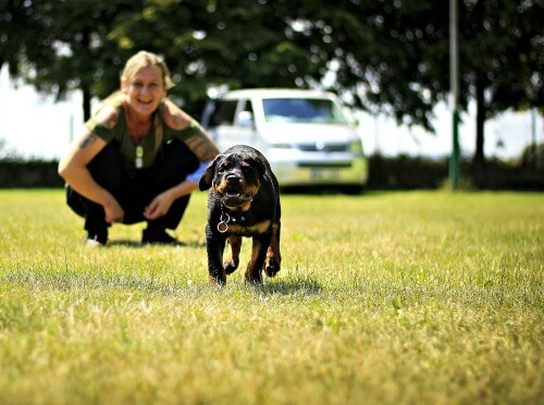 owner training rottweiler puppy