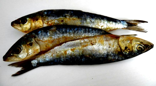 Sardines for homemade puppy food