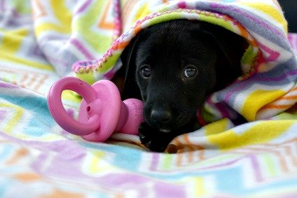 Puppy with teething pacifier toy