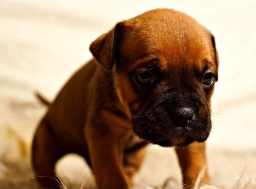 Tiny sad puppy